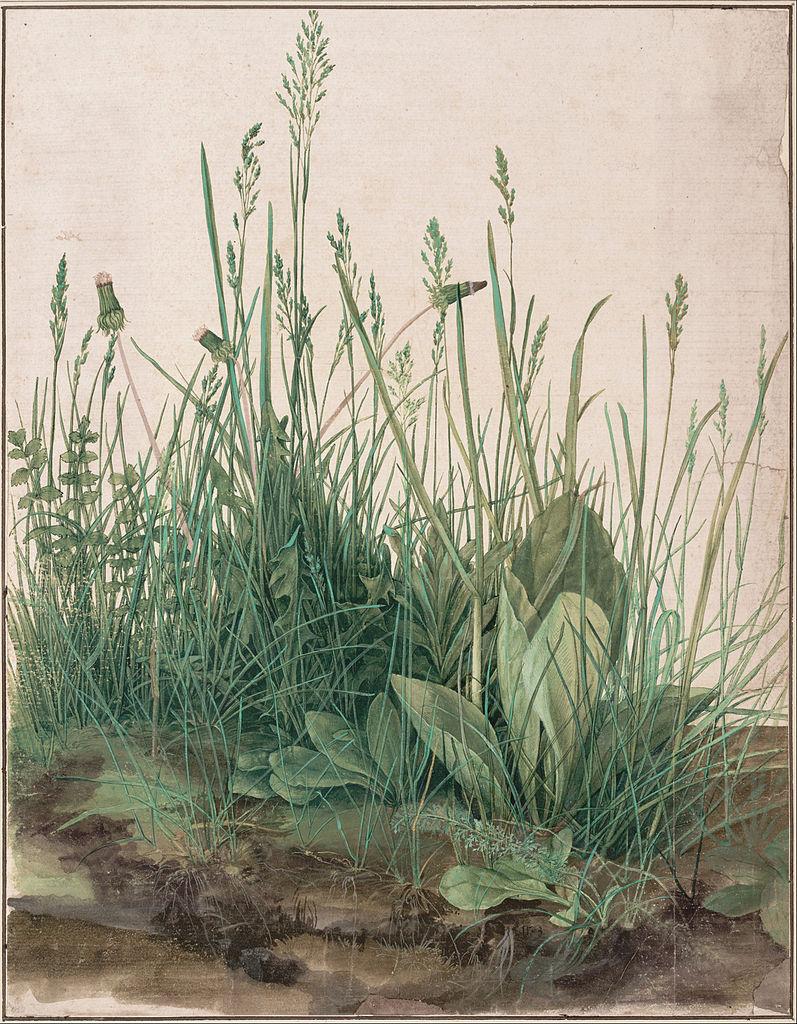 797px-Albrecht_Dürer_-_The_Large_Piece_of_Turf,_1503_-_Google_Art_Project
